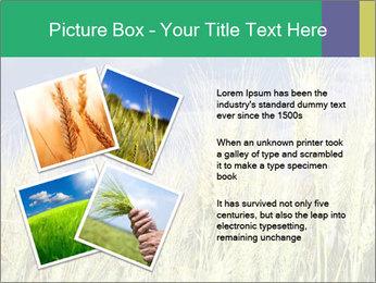 Wheat ears PowerPoint Template - Slide 23