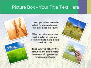 Wheat ears PowerPoint Template - Slide 24