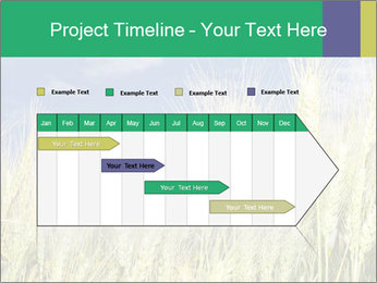 Wheat ears PowerPoint Template - Slide 25