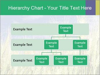 Wheat ears PowerPoint Template - Slide 67