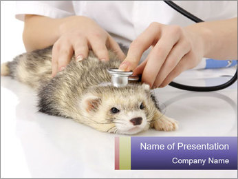 The veterinary PowerPoint Template - Slide 1