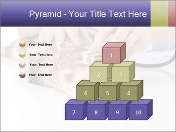 The veterinary PowerPoint Templates - Slide 31