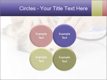 The veterinary PowerPoint Template - Slide 38