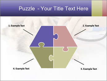 The veterinary PowerPoint Template - Slide 40