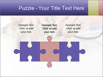 The veterinary PowerPoint Templates - Slide 42