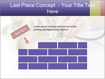 The veterinary PowerPoint Template - Slide 46