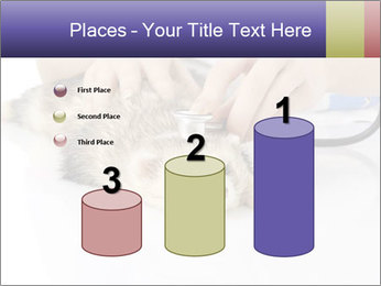 The veterinary PowerPoint Template - Slide 65