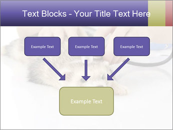 The veterinary PowerPoint Templates - Slide 70
