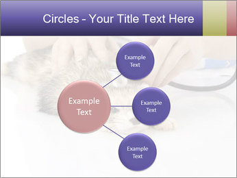 The veterinary PowerPoint Template - Slide 79