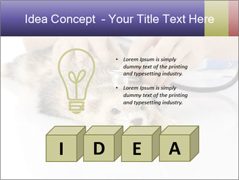The veterinary PowerPoint Template - Slide 80
