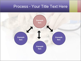 The veterinary PowerPoint Template - Slide 91