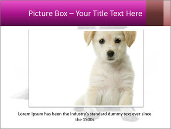 Border Collie Breed PowerPoint Template - Slide 15