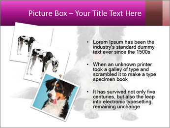 Border Collie Breed PowerPoint Template - Slide 17