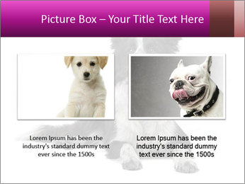 Border Collie Breed PowerPoint Template - Slide 18
