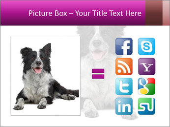 Border Collie Breed PowerPoint Template - Slide 21