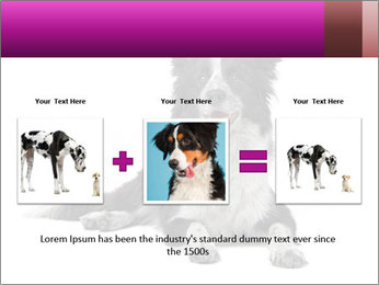Border Collie Breed PowerPoint Template - Slide 22