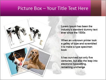 Border Collie Breed PowerPoint Template - Slide 23