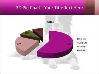 Border Collie Breed PowerPoint Template - Slide 35