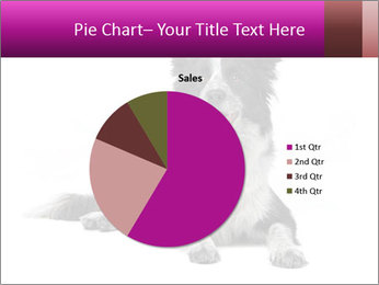 Border Collie Breed PowerPoint Template - Slide 36