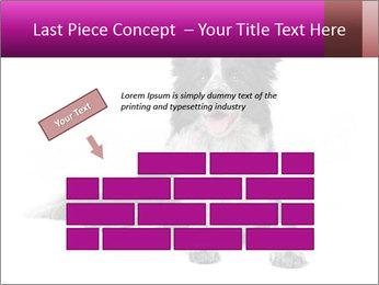 Border Collie Breed PowerPoint Template - Slide 46