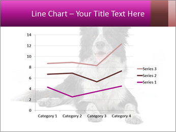 Border Collie Breed PowerPoint Template - Slide 54
