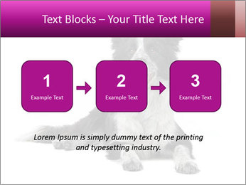 Border Collie Breed PowerPoint Template - Slide 71