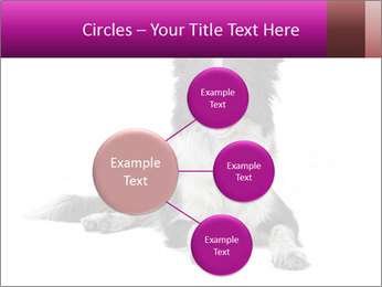 Border Collie Breed PowerPoint Template - Slide 79