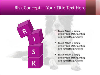 Border Collie Breed PowerPoint Template - Slide 81