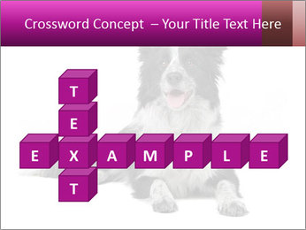 Border Collie Breed PowerPoint Template - Slide 82