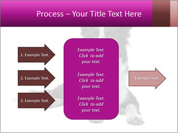 Border Collie Breed PowerPoint Template - Slide 85