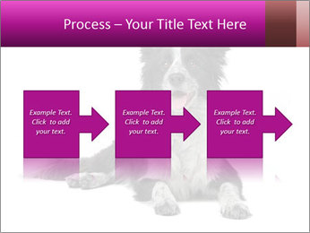 Border Collie Breed PowerPoint Template - Slide 88