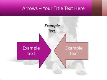Border Collie Breed PowerPoint Template - Slide 90