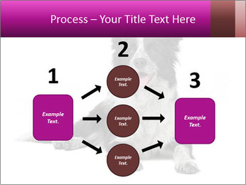 Border Collie Breed PowerPoint Template - Slide 92