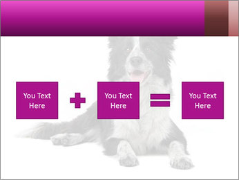 Border Collie Breed PowerPoint Template - Slide 95