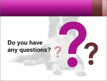 Border Collie Breed PowerPoint Template - Slide 96