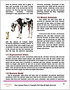 0000091483 Word Template - Page 4