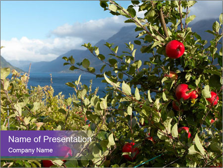 Apple-tree in the foreground PowerPoint Templates