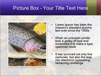 Wild rainbow PowerPoint Template - Slide 13