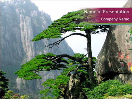 Pine PowerPoint Template