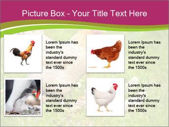 Mother chicken PowerPoint Template - Slide 14