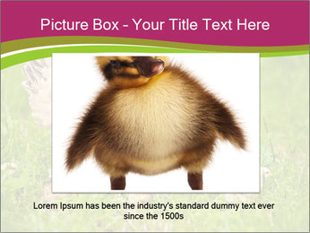 Mother chicken PowerPoint Template - Slide 16