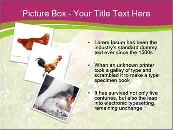 Mother chicken PowerPoint Template - Slide 17