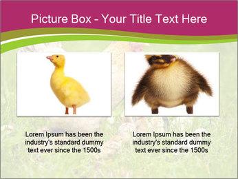 Mother chicken PowerPoint Template - Slide 18