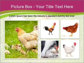 Mother chicken PowerPoint Template - Slide 19