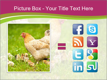 Mother chicken PowerPoint Template - Slide 21