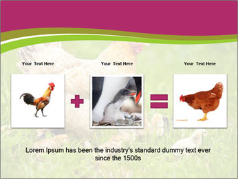 Mother chicken PowerPoint Template - Slide 22