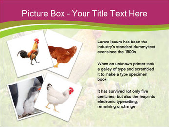 Mother chicken PowerPoint Template - Slide 23