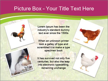 Mother chicken PowerPoint Template - Slide 24