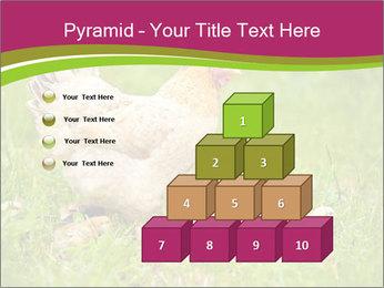 Mother chicken PowerPoint Template - Slide 31