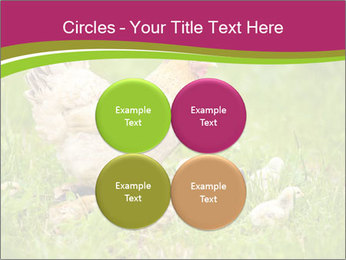 Mother chicken PowerPoint Template - Slide 38